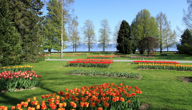 Springtime Tulips feast, Morges, Switzerland. Lots of beautiful tulips for springtime Tulips feast at Park of Independance in Morges, Switzerland. See Alps royalty free stock image