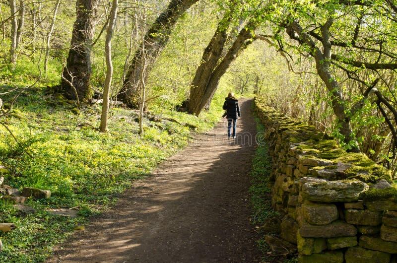Download Springtime walk stock photo. Image of woman, sunny, lending - 24611646