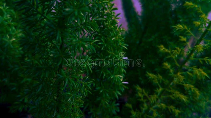 Sprinkhaan of sprinkhaan op groene bladeren royalty-vrije stock foto