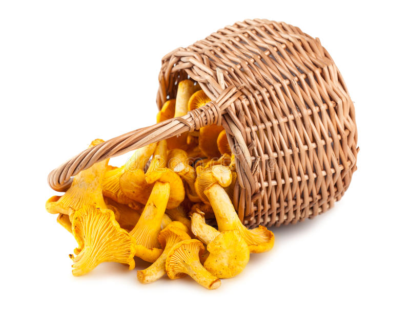 Sprinkled basket with mushrooms