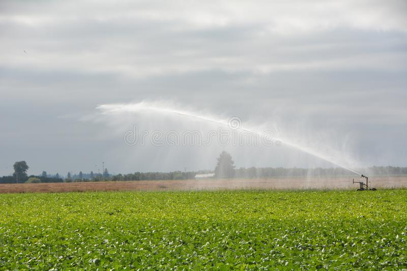 Sprinkler on farm in Willamette Valley, Oregon. This is a large agricultural sprinkler spraying crops with water under cloudy skies north of Salem in Oregon`s stock photography