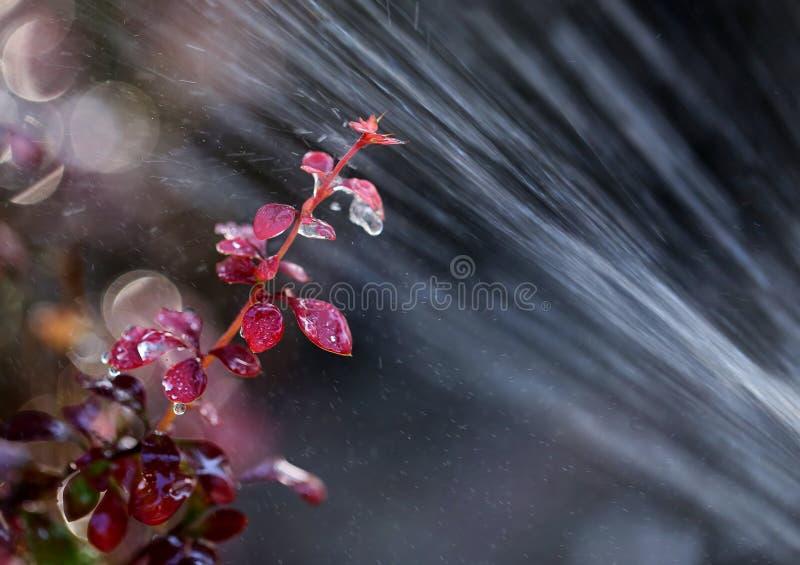 Sprinkler And Flower stock photo