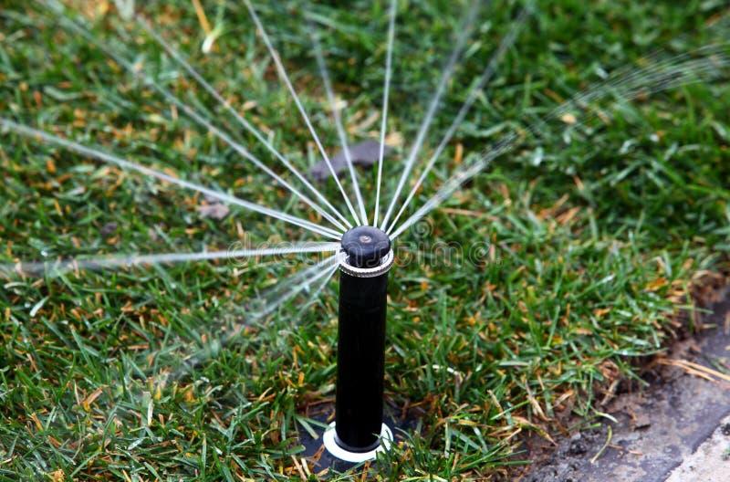 Sprinkler head spraying water on green lawn stock image