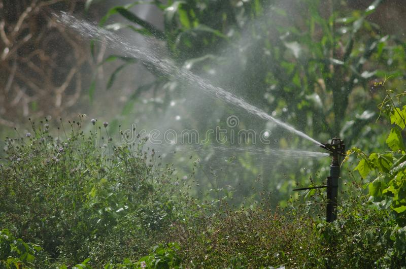 Sprinkler Irrigating a potatoes cultivation. royalty free stock images