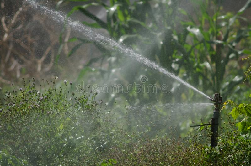 Sprinkler Irrigating a potatoes cultivation. Agulo. La Gomera. Canary Islands. Spain stock images