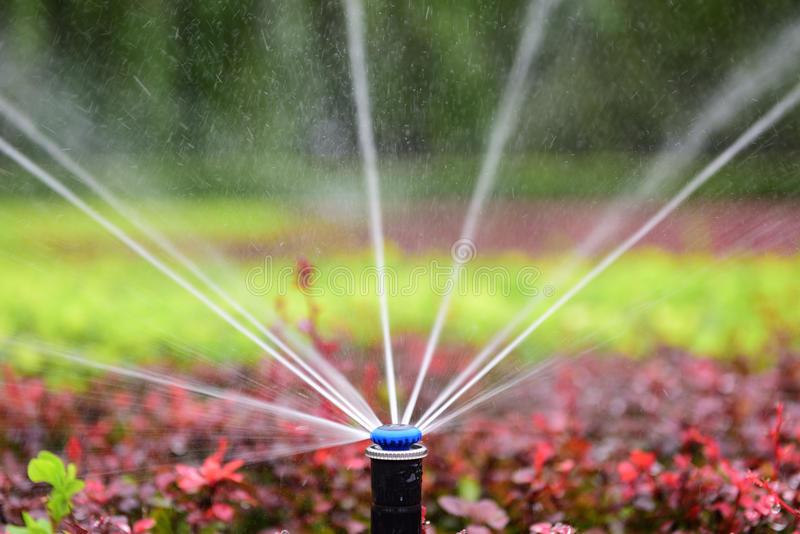 Sprinkler irrigation. Gardeners use the sprinkler irrigation technology to water flowers and plants in the park royalty free stock images