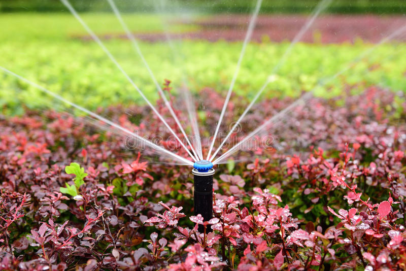 Sprinkler irrigation. Gardeners use the sprinkler irrigation technology to water flowers and plants in the park royalty free stock photo