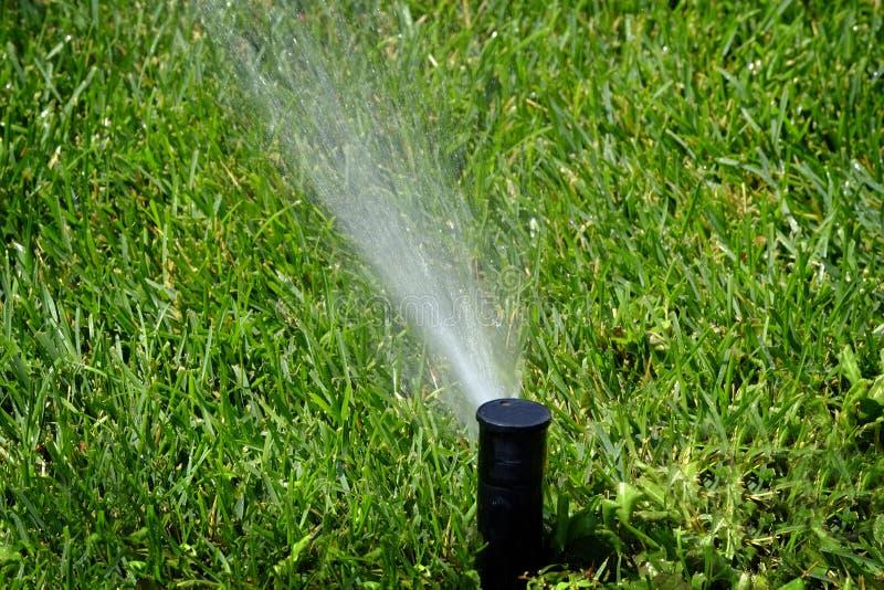 Sprinkler Spraying Water on Lush Green Lawn Yard. Sprinkler spraying fresh wet water on lush green yard lawn grass stock image