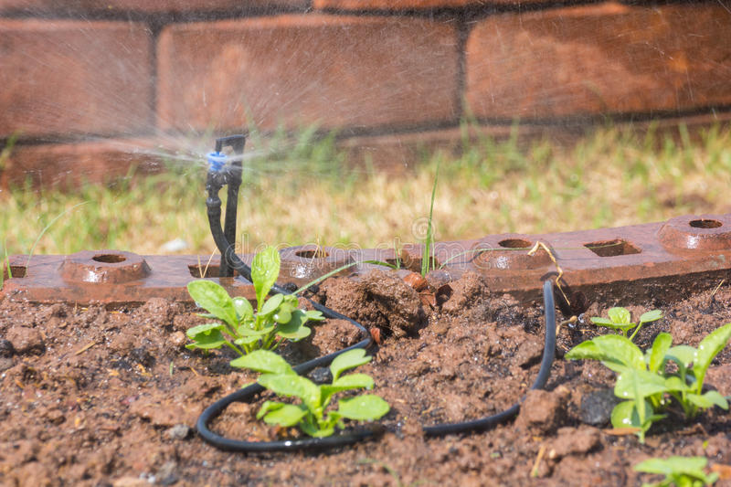 Sprinkler and sprout. On soil stock photography