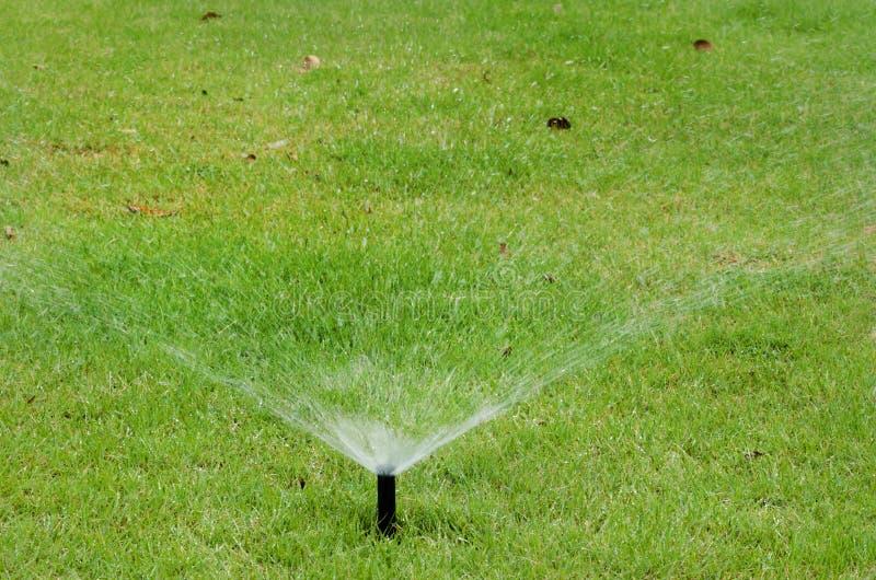 Sprinkler on green grass royalty free stock images