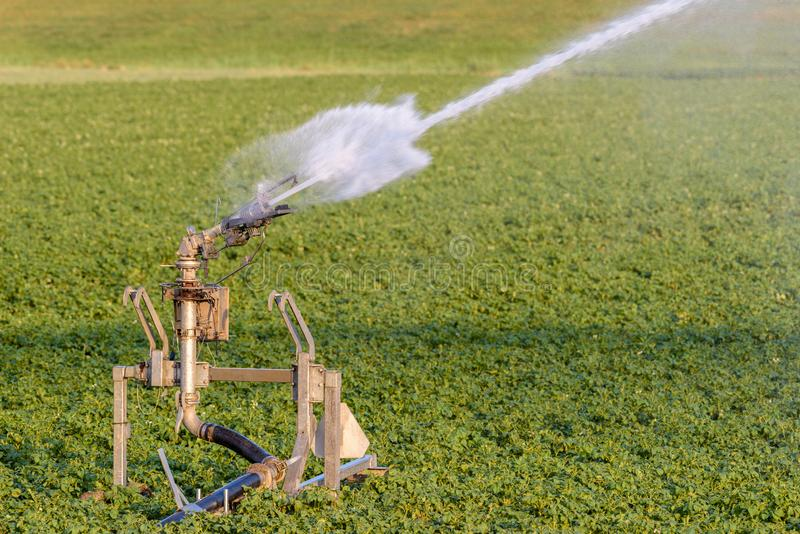 A sprinkler is watering farmland during dry weather royalty free stock images