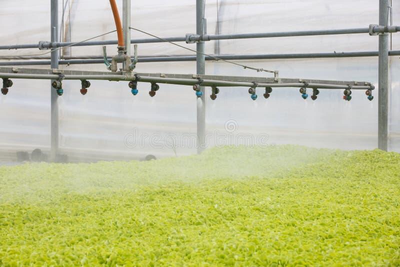 Sprinkleranläggning i växthuskorridor med plantor arkivfoton