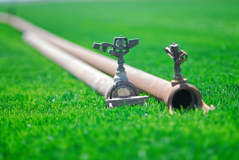 Sprinklers attached to irrigation pipes laying on green grass. Lush, green lawn in a field of production as indicated by the professional, farmer grade stock photos