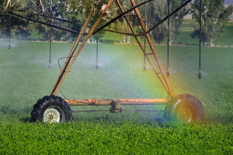 Sprinklers Irrigating Crop Field Farming Grains Lush Green with. Sprinkers irrigating crops green lush field farming grains water spraying rainbow from mist royalty free stock images