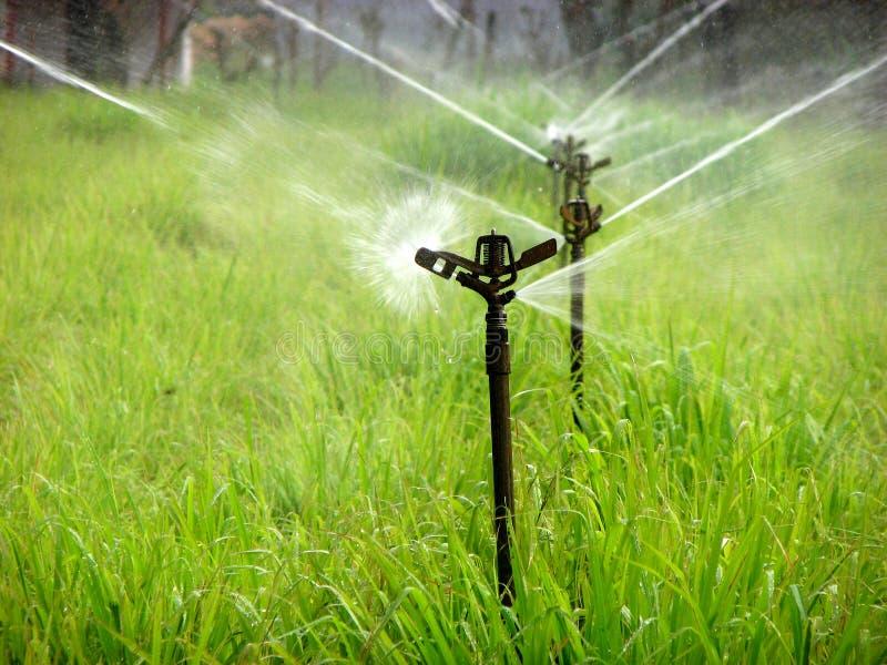 sprinklervatten royaltyfria bilder