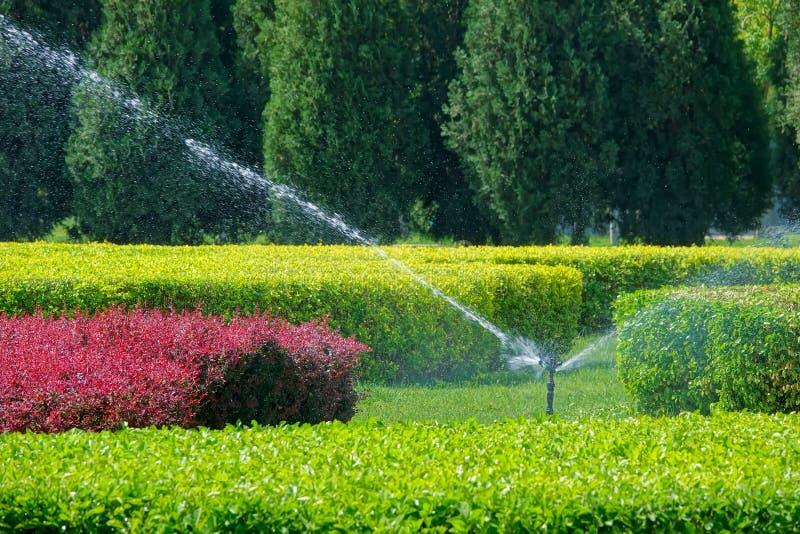 Sprinkling irrigation. The sprinkling irrigation system is working in garden stock photos