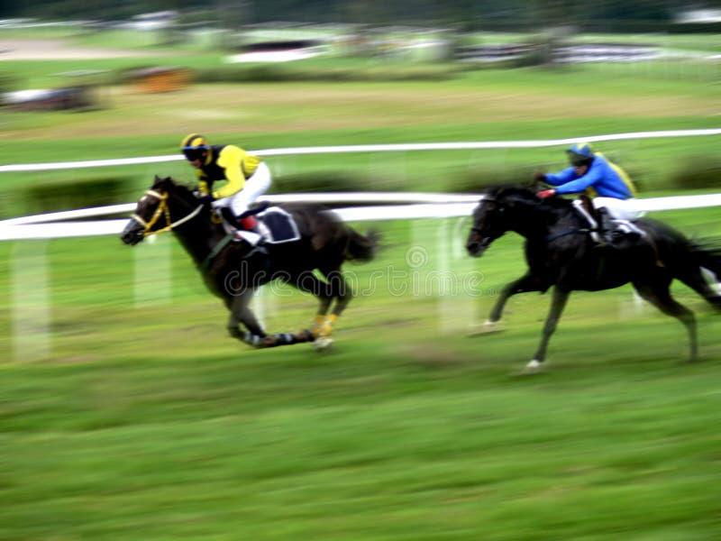Sprint de chemin de cheval image stock