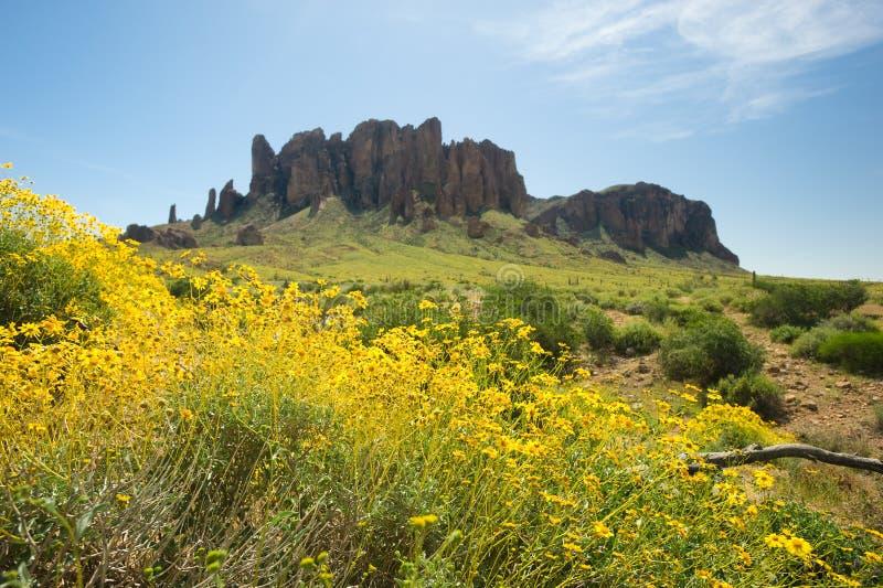 Sprintime in der Wüste stockfotografie