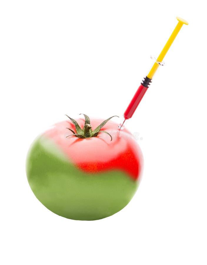 Spritze, die rote Flüssigkeit in eine grüne Tomate einspritzt stockbild