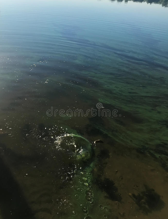Download Spritzen auf dem Wasser stockbild. Bild von isolat, sauber - 96929577