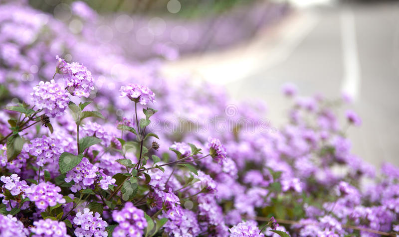 Sprng flowers royalty free stock photos