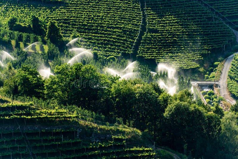 Sproeierirrigatie in een boomgaard - Trentino Alto Adige Italy stock foto