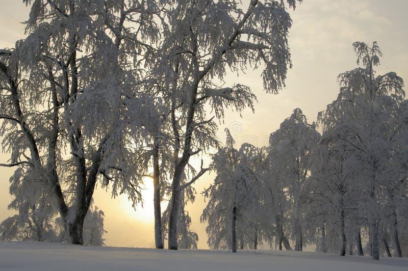 Sprookje van de winterbos royalty-vrije stock fotografie