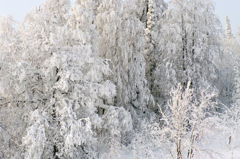 Sprookje van de winterbos royalty-vrije stock foto's