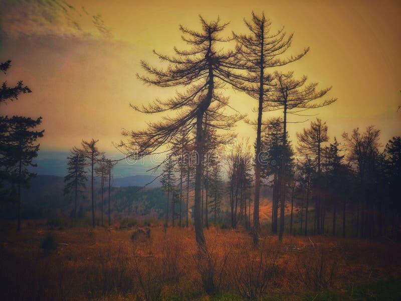 Sprookjesland in de berg royalty-vrije stock afbeelding