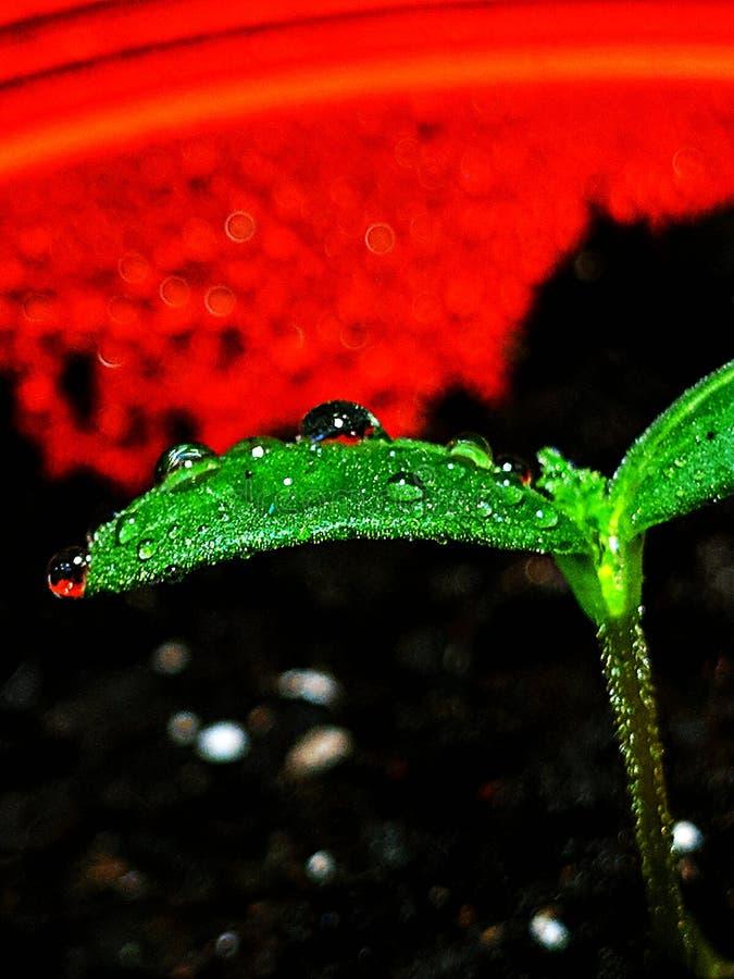 sprout στοκ φωτογραφίες