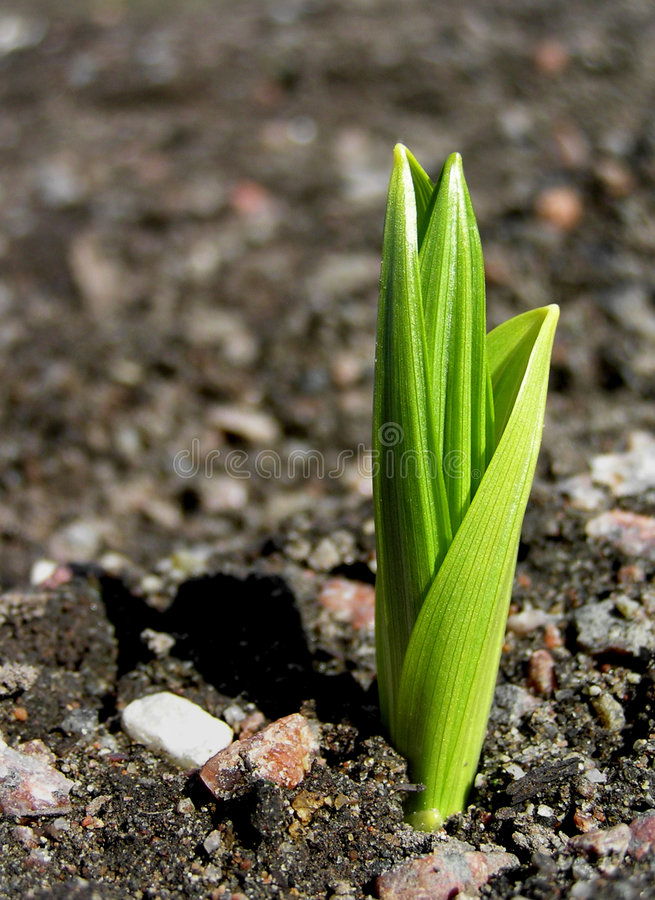 Download Sprout stock photo. Image of beginning, sprout, nature - 110592