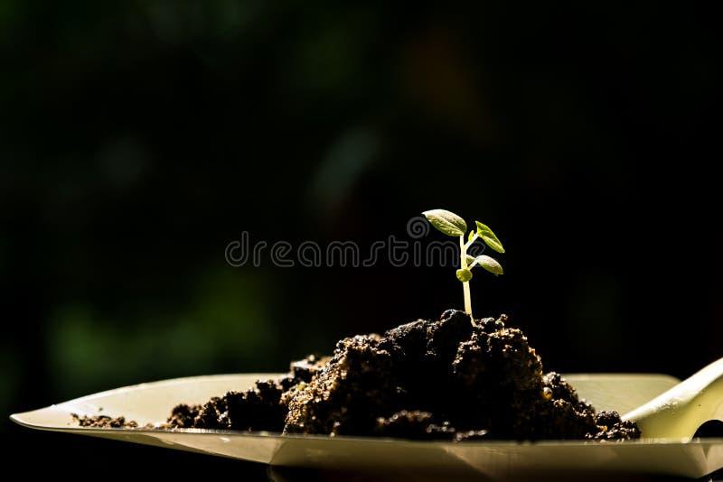sprout στοκ εικόνες