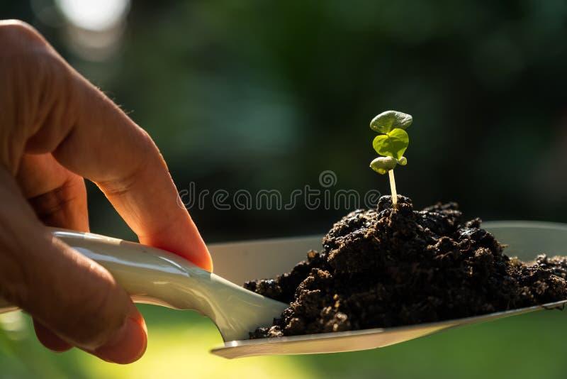 sprout στοκ φωτογραφίες με δικαίωμα ελεύθερης χρήσης