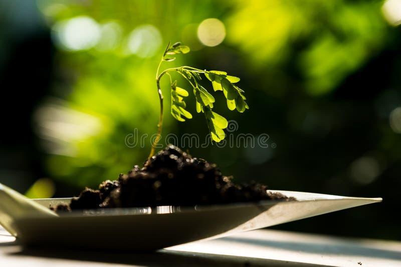 sprout στοκ φωτογραφία με δικαίωμα ελεύθερης χρήσης