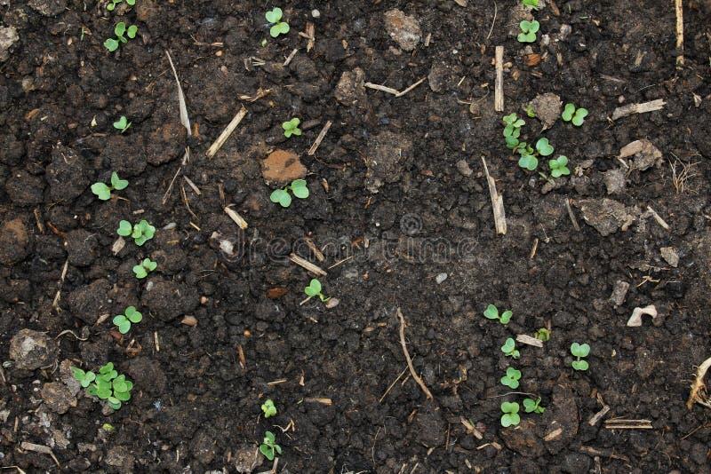 sprout στοκ εικόνα με δικαίωμα ελεύθερης χρήσης