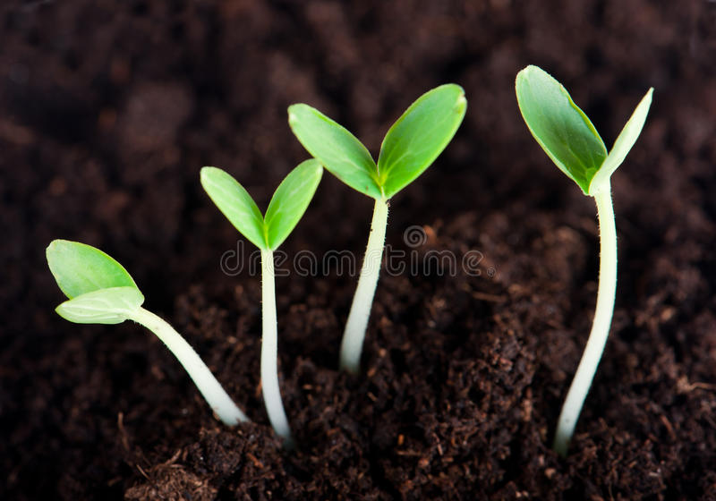 Download Sprout Stock Photography - Image: 23723402
