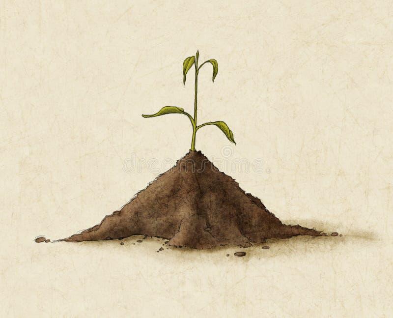 Sprout ilustração royalty free