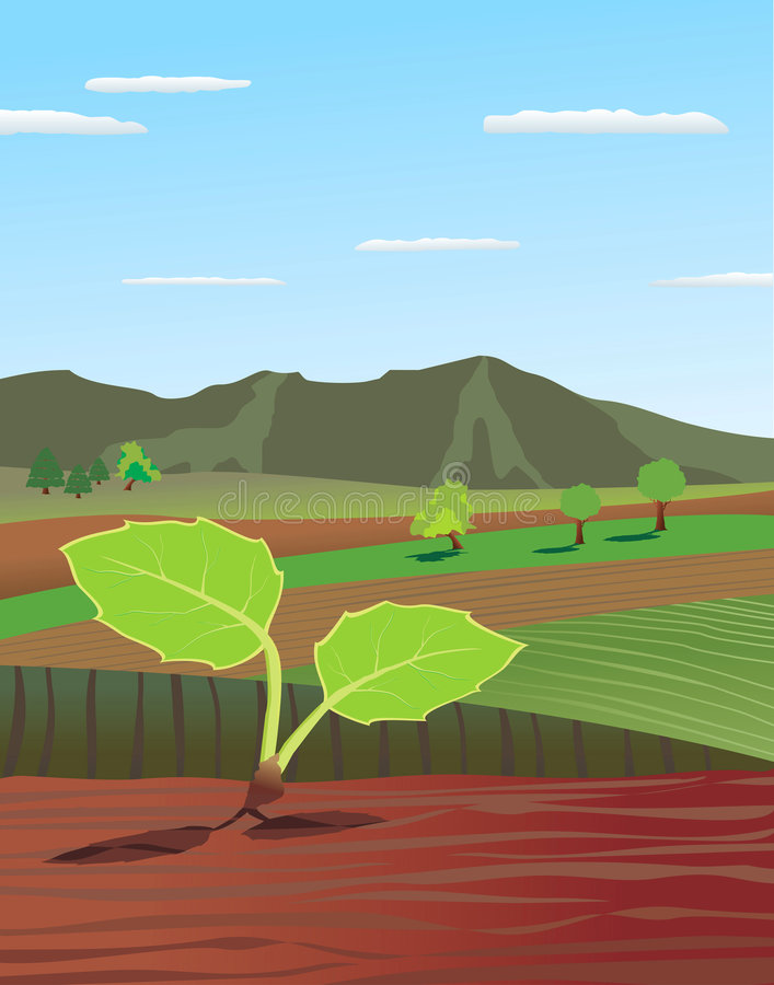 Sprout. Green sprout a background of field stock illustration