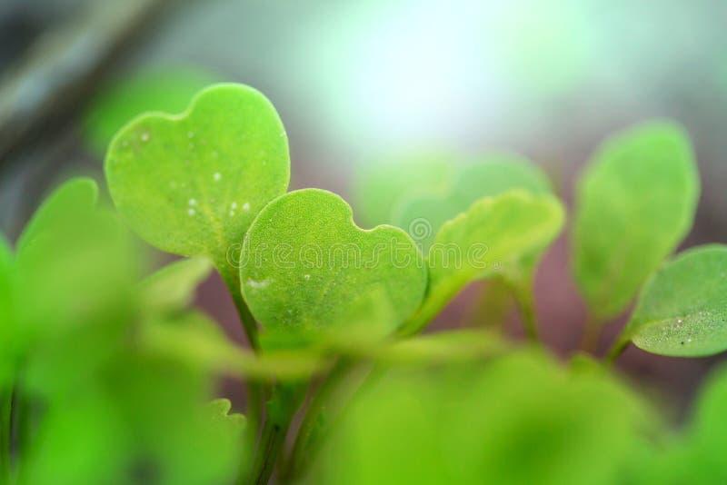 sprout στοκ εικόνες με δικαίωμα ελεύθερης χρήσης