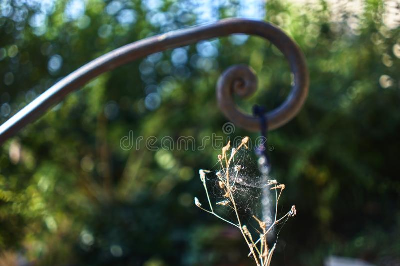 Nature and man. A sprout against a spiral royalty free stock photo
