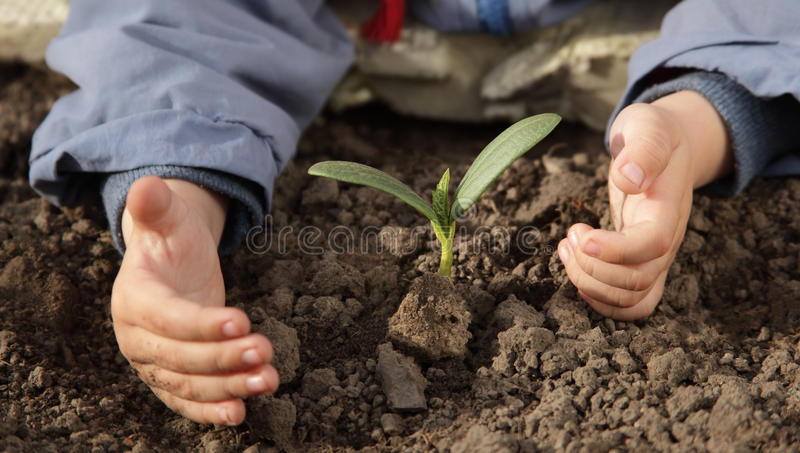 Download Sprout in children hand stock photo. Image of caucasian - 25008670