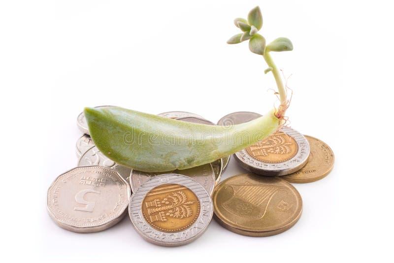 Sprout do succulent sobre moedas foto de stock