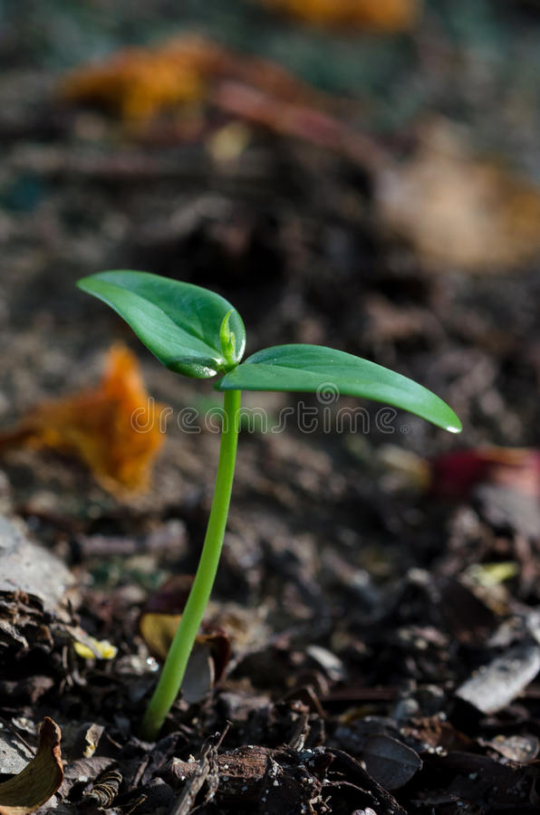 Sprout in the forest royalty free stock image
