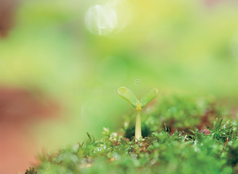 Sprout on grass royalty free stock photo