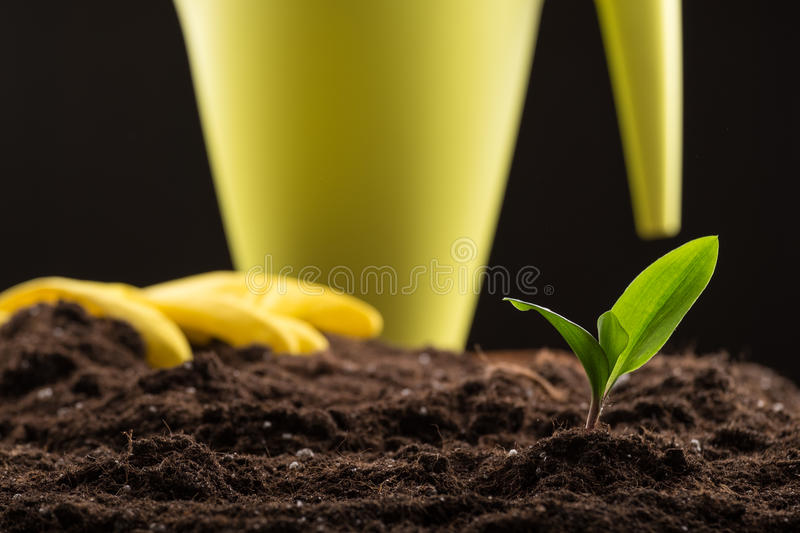 Sprout in ground. Green young sprout growing in fertile soil with watering can and rubber gloves on background stock photo