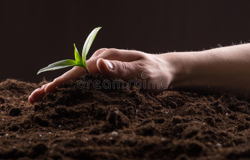 Sprout in ground. Man care about green young sprout growing in good brown soil. New life concept royalty free stock image