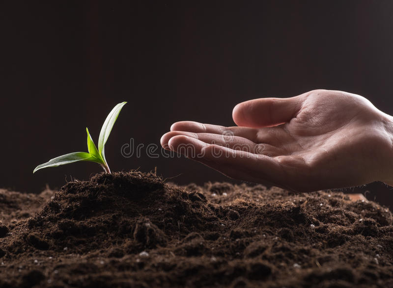 Sprout in ground royalty free stock photography