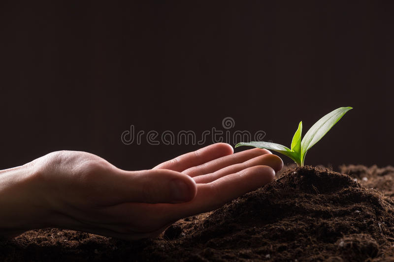 Sprout in ground. Man care about green young sprout growing in good brown soil. New life concept royalty free stock photo