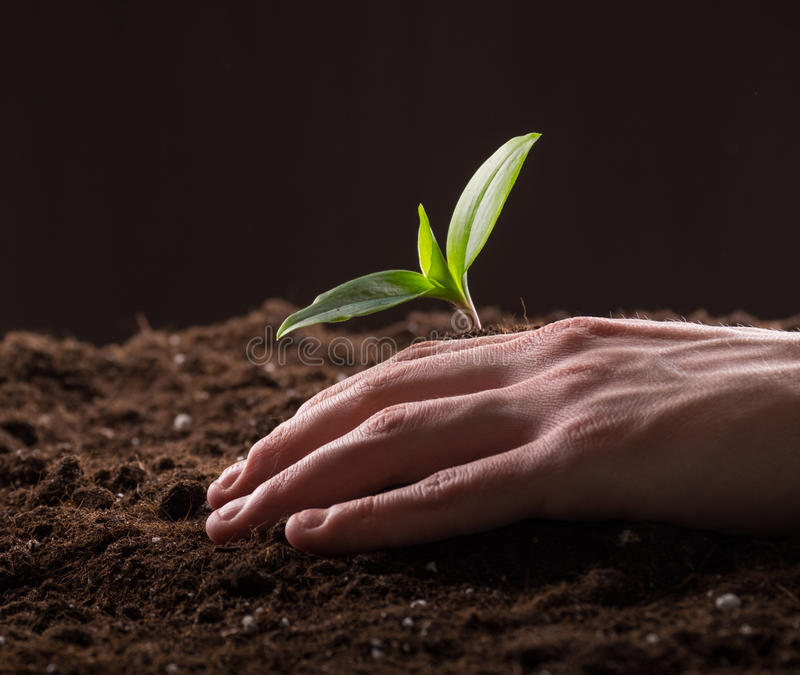 Sprout in ground. Man care about green young sprout growing in good brown soil. New life concept stock image
