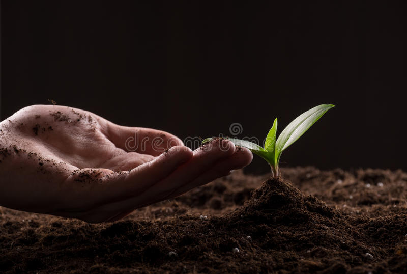 Sprout in ground. Man care about green young sprout growing in good brown soil. New life concept royalty free stock photos